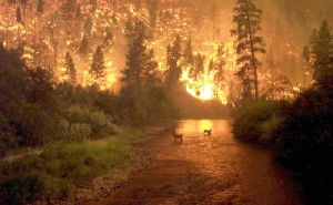 Fire near the town of Hamilton in Montana's Bitterroot Valley, 2000