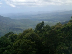 Dorrigo Rain Forest, New South Wales