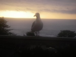 Seagull on Oregon Coast